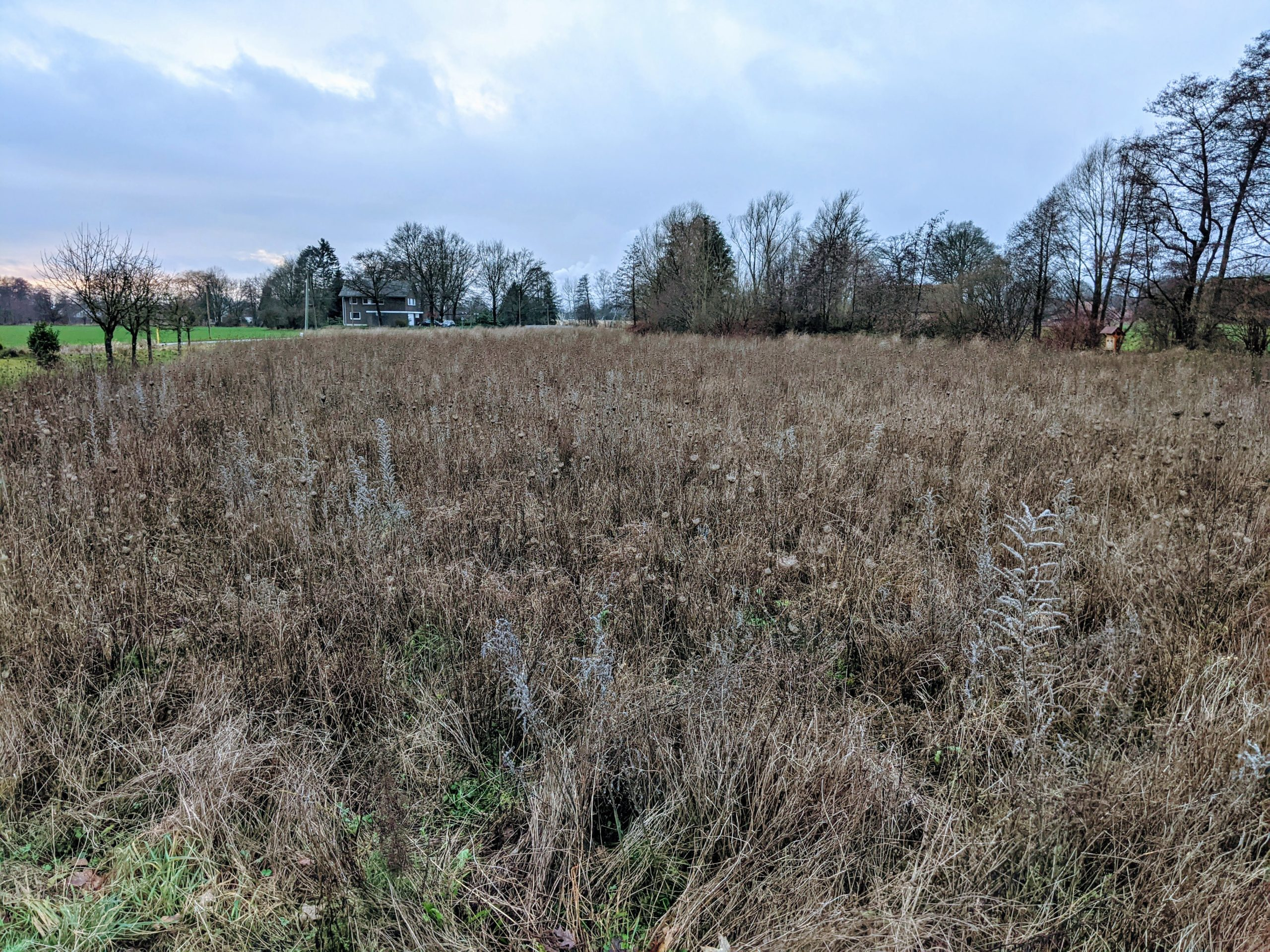 Eine Fläche des BienenBuffet im Januar 2021